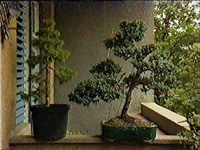 BONSAI PAVLOV ZORAN